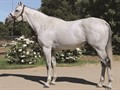 Graydar Stallion Register Online
